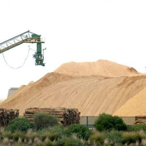 Woodchip export prices surged in September