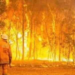 Australia's fires: impact felt long into the future