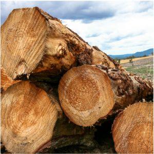 Log export data tells tale of two Tasmans