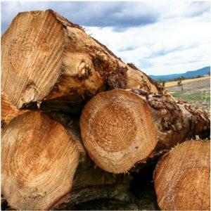 Australia's hardwood log exports rose 35% in 2018