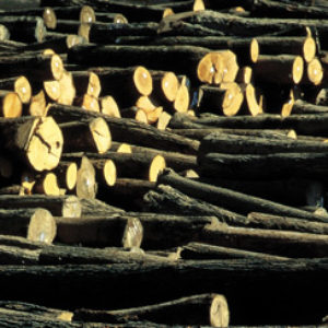 Log exports above 5 million m3 per year