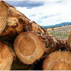 NZ log exports leap as prices fly